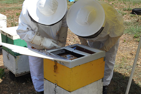 Professional beekeepers testing our products